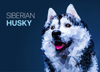 Polygonal Siberian Husky vector illustration