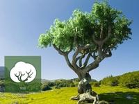 Ícono árbol