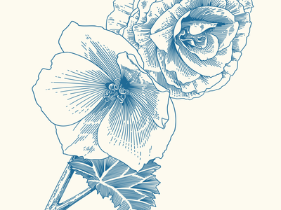 Begonias begonia vector illustration