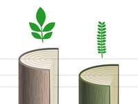 Appleton Trees Infographic