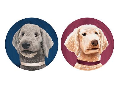 Poodles furry companions dogs poodles