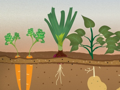 Grow your own wip illustration vector crop vegetables