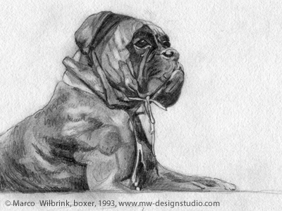 Boxer Dog Pencil Drawing By Marco Stephano Dribbble Dribbble