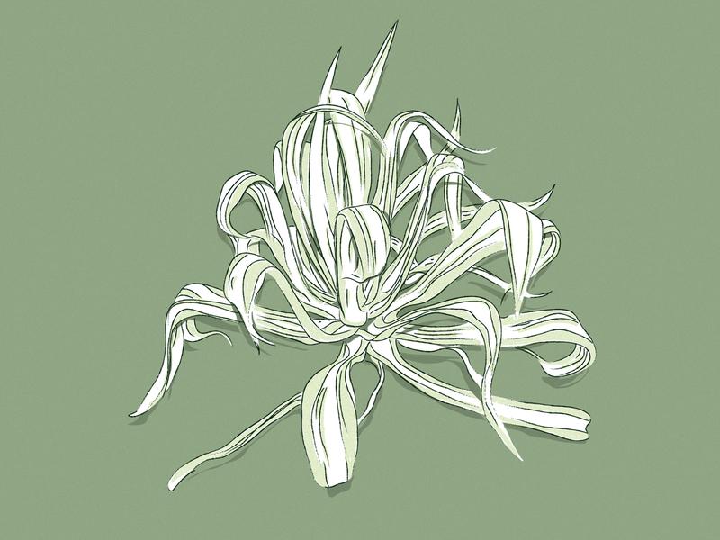kust color graphics illustration grass nature green bush plant