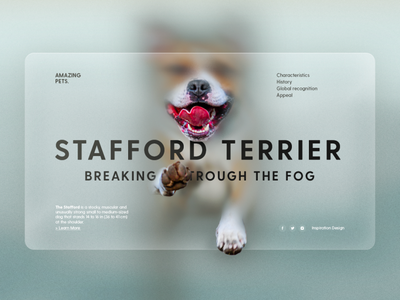 Amazing Pets inspiration illustration diseño gráfico uidesign graphic design template web website interaction interface