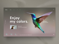 Birds Inspiration
