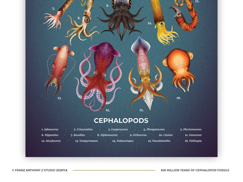 Cephalopods poster sea ocean marine animal nature illustration