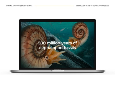 500 million years of cephalopod fossils