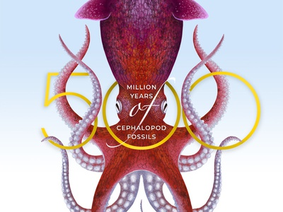 Cephalopods Behance cover