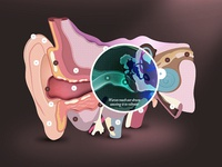 Interactive Ear