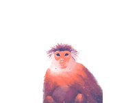 Portraits of monkeys