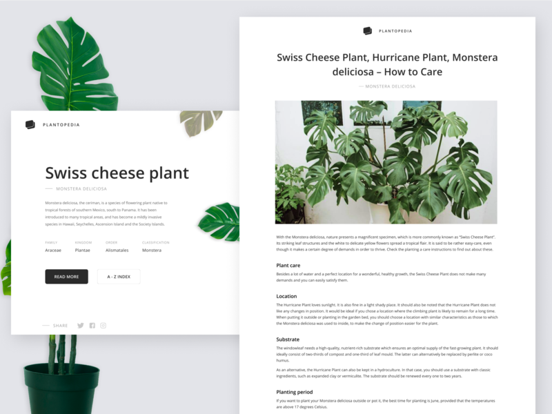 Plantopedia website best 2019 product design typography figmadesign branding website web design webdesign ux ui minimal design