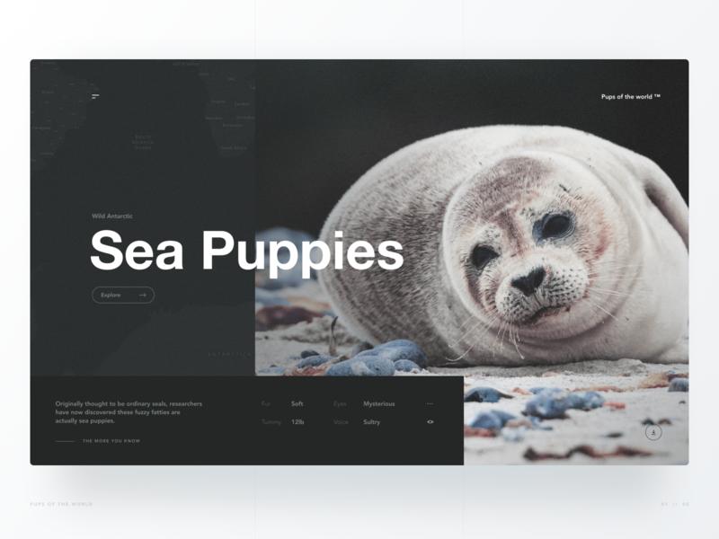 Wild Antarctic Sea Puppies hero section nature avenir helvetica dark gridded grid website web desktop animal ux ui