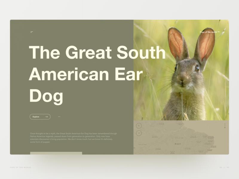 The Great South American Ear Dog layout grid desktop website doggo pupper bunny animals wildlife hero section hero image web design ux ui