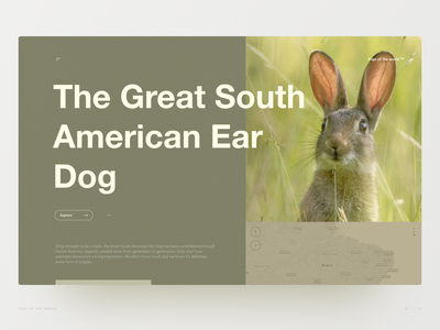 The Great South American Ear Dog layout grid desktop website doggo pupper bunny animals wildlife hero section hero image web design ux ui