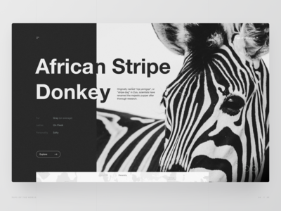 The African Stripe Donkey