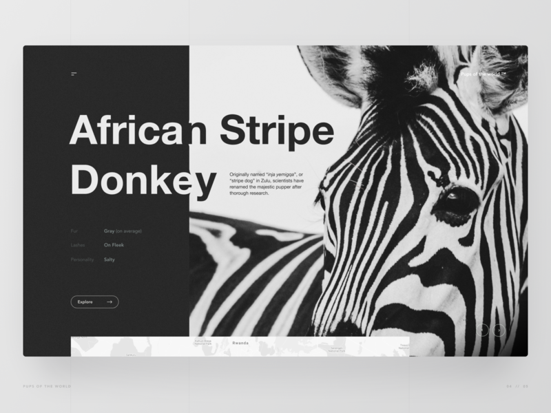 The African Stripe Donkey donkey zebra animal wildlife black and white hero section website web design ux design ui design ux ui