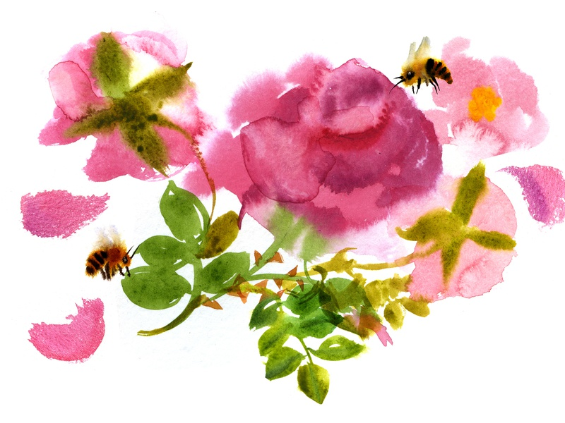 Roses watercolor illustraion bees roses