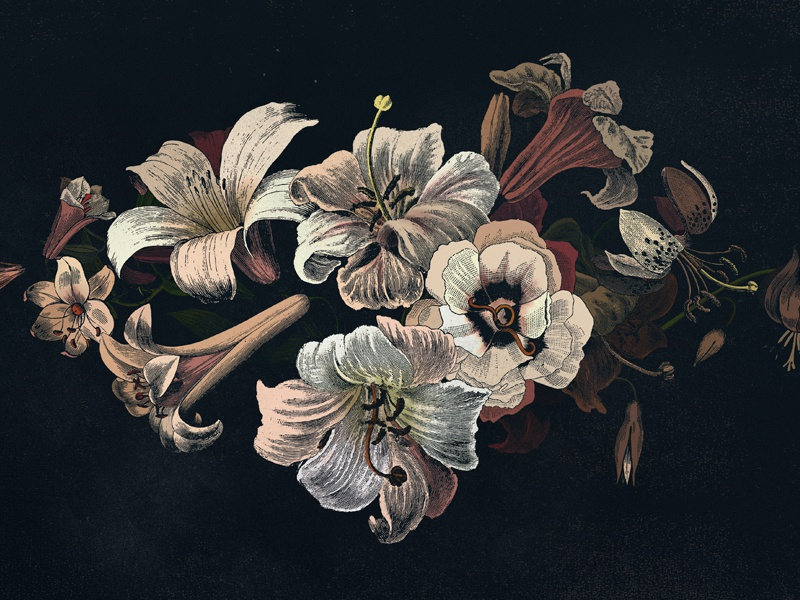 Flowers flowers lilies etching