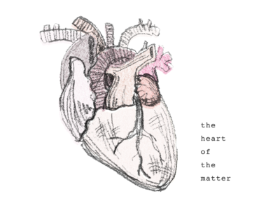 Heart of the Matter pencil drawing icon anatomical coloredpencil illustration