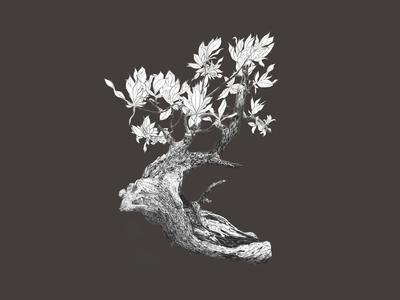 Bonsai Tree - Digital Illustration