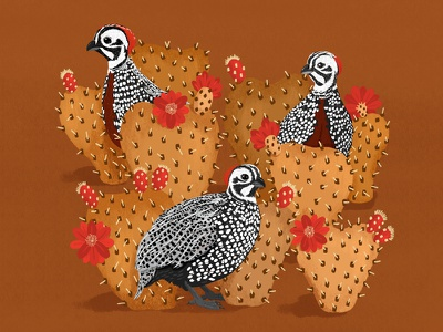 Montezuma Quail desert arizona montezumaquail quail illustration graphic