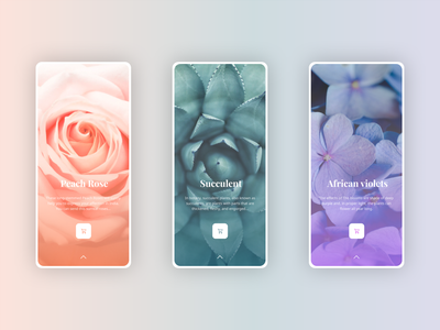 Rosee Application flower trend ios mobile homepage home profile card app mobile app ui branding adobexd explore simple elegant clean