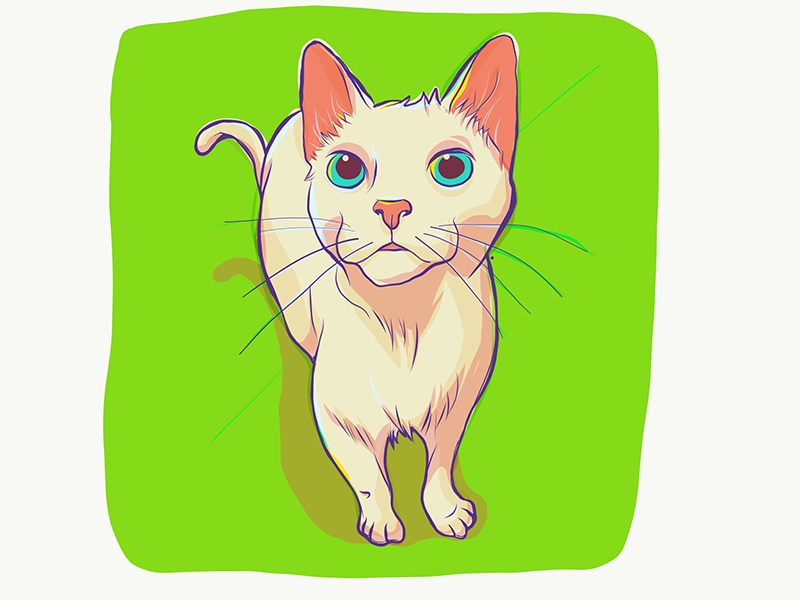 Persephone, study. illustration cat