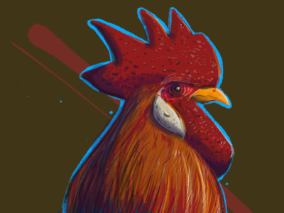 Rooster, study. rooster chicken procreate illustration