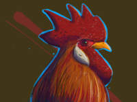Rooster, study.
