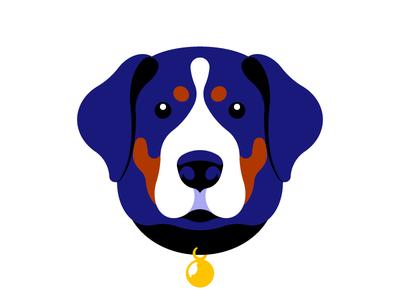 Swiss mountain dog illustration portrait vector illustration head muzzle animal dog vector