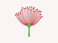 Pohutukawa flower