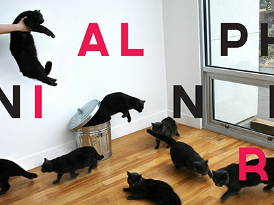AIGA KC A9 type and image cats cat typography layering aiga nine 9
