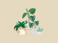 Illustration | Plants 🌿
