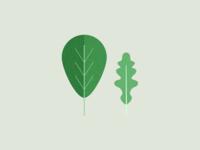 Illustration | Veggie 🥗