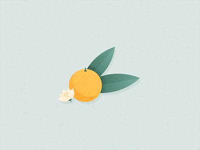Illustration | Clementine 🍊 fruit food illustration veggie vegan food clementine flat vector minimal illustration sketchapp julie charrier