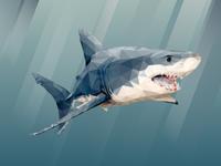Shark Poly