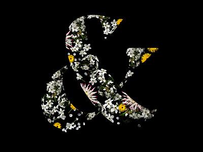 Floral Ampersand flowers spring type typography ampersand flora floral