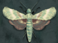 Yellow and Green Moth Study