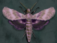 Magenta Moth Study