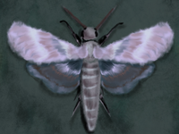 Purple Moth Study