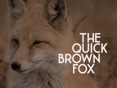 The quick brown fox clean grotesque bold design branding lettering logo letters type vector typeface typography font