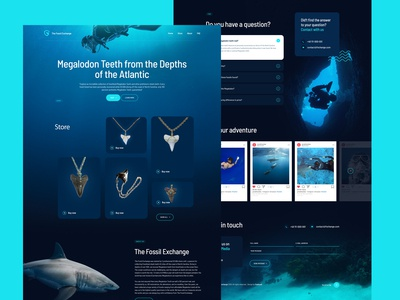 Fossil Exchange Website Design - Megalodon Shark Teeth