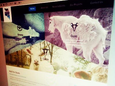 Livestock sa website shot