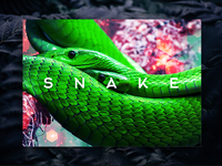 Snake Book Cover