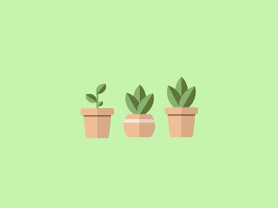 Succulents Minimalist Design green minimalist design succulent plant