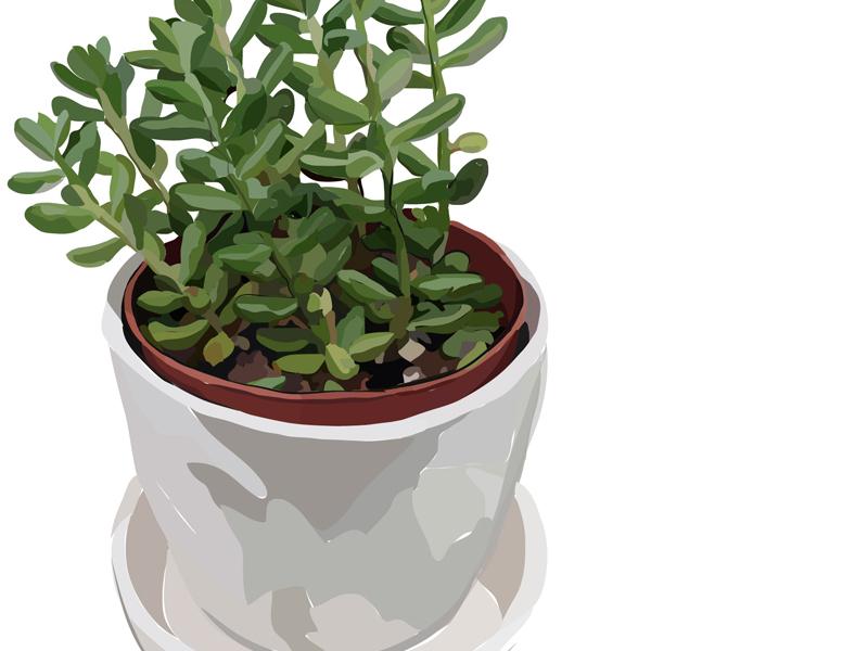 Succulente organic shades white succulent plant flat illustration