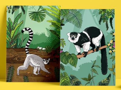 Lemur Habitat Illustrated Posters illustration signage interpretation posters plants tail primates animals trees forest jungle habitat white belted ruffed ringtail chester zoo zoo wildlife lemur