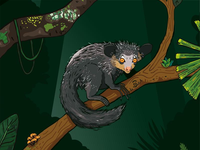 Aye Aye - Chester Zoo Illustration ugly character habitat jungle nocturnal dark night wildlife lemur nature animal illustration zoo aye aye