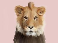 Kalahari Lion 🦁🦁🦁🦁